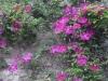 13_05_30_BLois_HoteldeVille_Roseraie 3