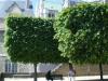 jardin_eveche2