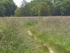 13_06_03_StGildas_Chemin-ds-prairie.jpg